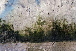 Mossy concrete 0001
