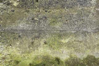 Mossy concrete 0004
