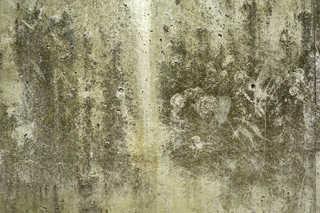 Mossy concrete 0005