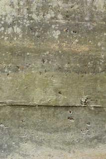 Mossy concrete 0008