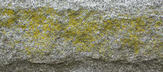 Mossy concrete 0010