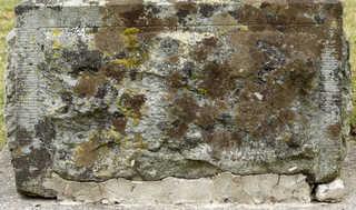 Mossy concrete 0011
