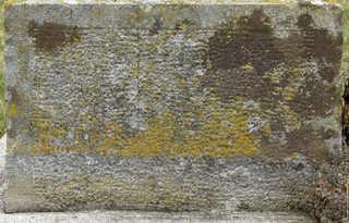 Mossy concrete 0014