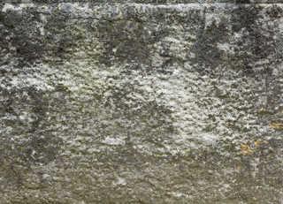 Mossy concrete 0019