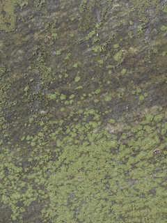 Mossy concrete 0023