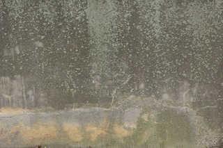Mossy concrete 0027