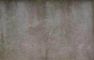 Mossy concrete 0029