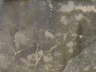 Mossy concrete 0030