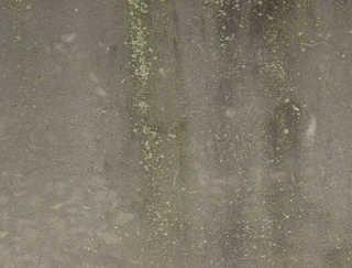 Mossy concrete 0032