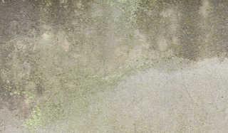 Mossy concrete 0034