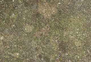 Mossy concrete 0035