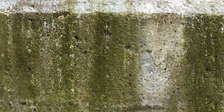 Mossy concrete 0036