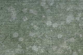 Mossy concrete 0037