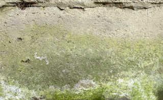 Mossy concrete 0038