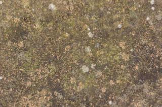 Mossy concrete 0039