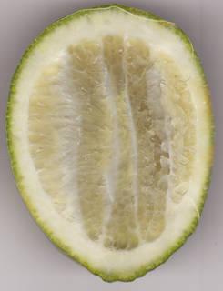 Fruits 0001
