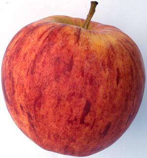 Fruits 0002