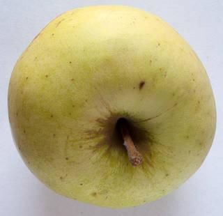 Fruits 0012
