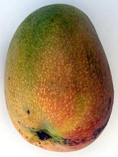 Fruits 0013