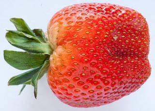 Fruits 0014