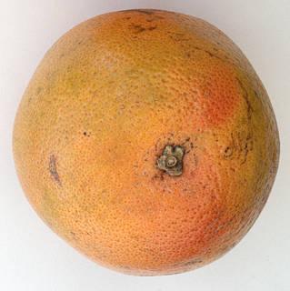 Fruits 0016