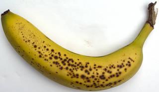 Fruits 0019