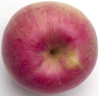Fruits 0021