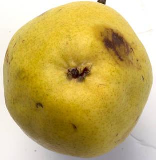 Fruits 0024