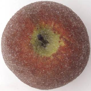 Fruits 0025
