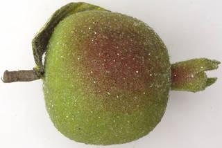 Fruits 0032