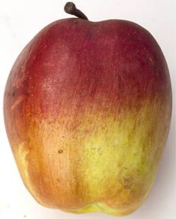 Fruits 0035