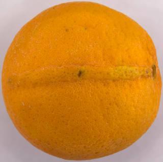 Fruits 0038