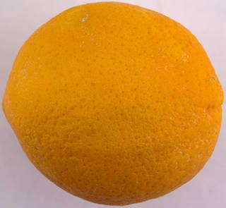 Fruits 0039