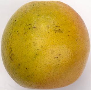 Fruits 0042