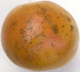 Fruits 0043