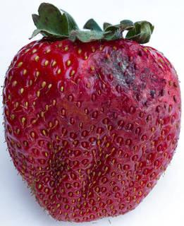 Fruits 0047