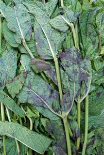 Vegetables 0023