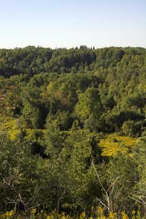 Forest landscapes 0005