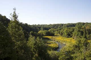 Forest landscapes 0006