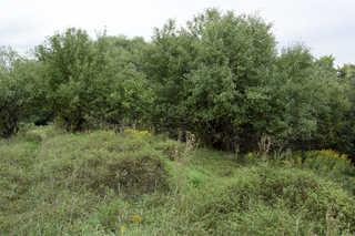 Forest landscapes 0007
