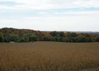 Forest landscapes 0008