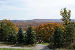 Forest landscapes 0009