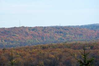 Forest landscapes 0010