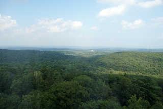 Forest landscapes 0012
