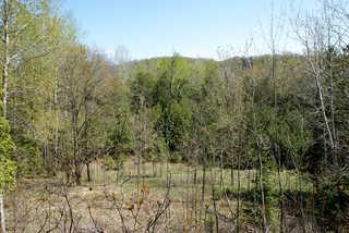 Forest landscapes 0013