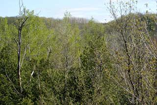 Texture of /landscapes/forest-landscapes/forest-landscapes_0013_02