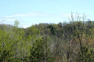 Texture of /landscapes/forest-landscapes/forest-landscapes_0013_03