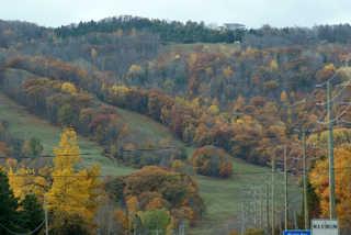 Forest landscapes 0014