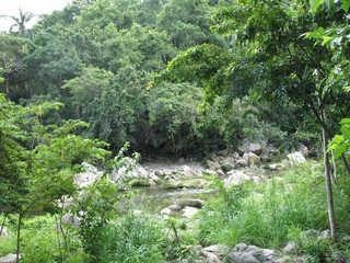 Forest landscapes 0018