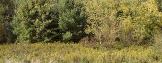 Forest landscapes 0020